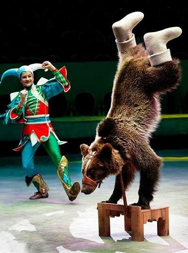 шоу дрессированный медведь